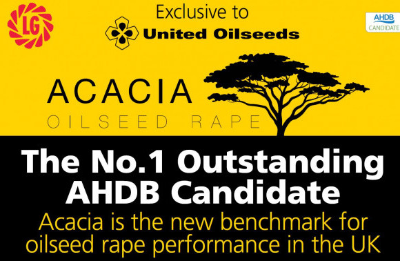 ACACIA No.1 AHDB Candidate Exclusively Available from United Oilseeds image