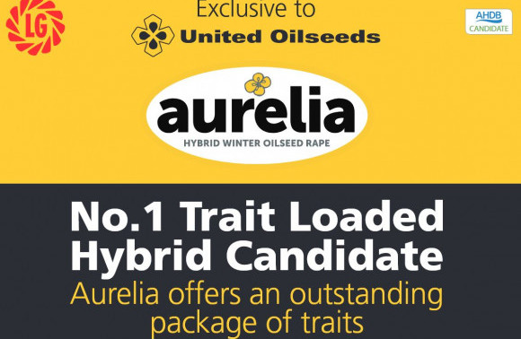 AURELIA - Top Trait-Loaded AHDB Hybrid Candidate Exclusive to United Oilseeds image