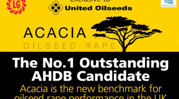 ACACIA No.1 AHDB Candidate Exclusively Available from United Oilseeds