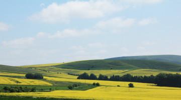 LG Aurelia Yields 5.12 t/ha in Scottish Borders