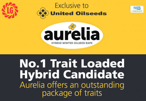 AURELIA - Currently No.1 Trait-Loaded Hybrid in AHDB Harvest Trials 2016-19 Gross Output