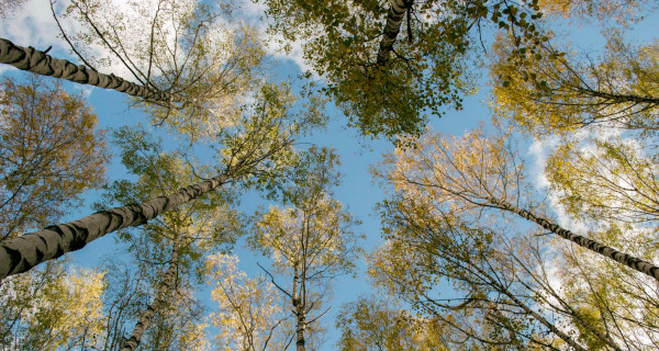 2,300 Trees Supplied Free to United Oilseeds & Hubbards Customers