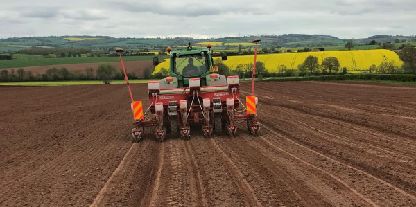 11 Maize varieties drilled for Hubbards Seeds Trials