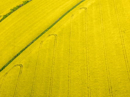 UK rapeseed prices edging up